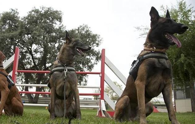 Habrá demostraciones con perros adiestrados / ABC