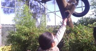 Un joven de la fundación interactúa con uno de los animales del zoo / Fundación TAS
