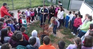 La plantación de un árbol es una de las actividades, en la imagen los niños del Colegio El Olivo de Mairena del Aljarafe / Acción Solidaria