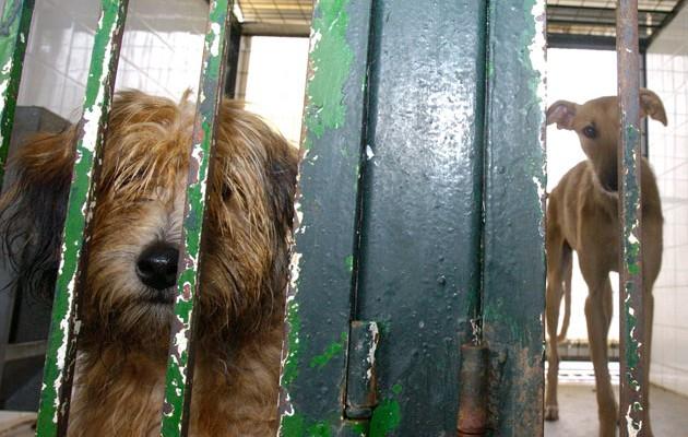 El zoosanitario municipal ofrece una nueva oportunidad a los perros y gatos abandonados o perdidos