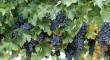 Las uvas también se toman en el Virgen Macarena, Virgen del Rocío y Valme