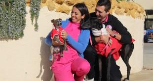 Rocío Arrabal, responsable del equipo veterinario, sostiene al galgo Zar de tres meses y medio que fue rescatado con una lesión en la cara. Antonio Mateo, responsable de marketing, con Sauron, un galgo de dos años que espera adoptante.