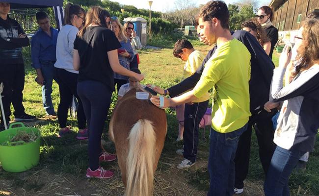 Los chicos y chicas del Programa Infantil fueron instruidos en los principios básicos de la monta terapéutica / Foto: Dace