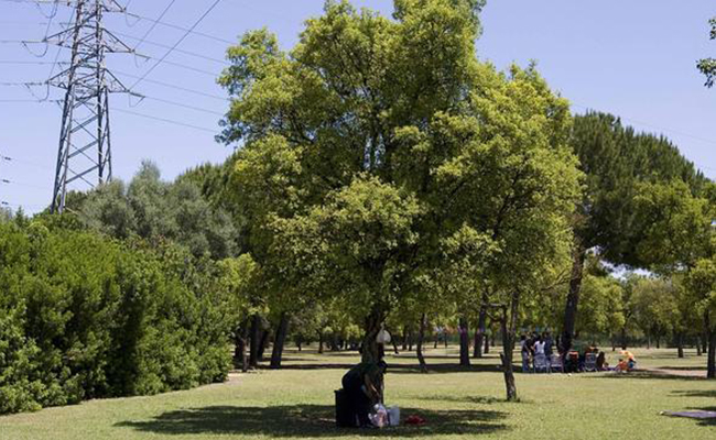 Parque del Alamillo / ABC