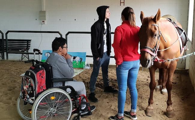proyecto-caballo-educa