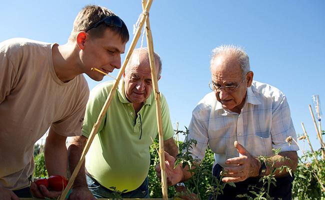 voluntarios-mayores-sevilla-(2)